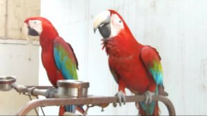 All Species Of Birds/Parrots For Sell - Los Angeles, CA